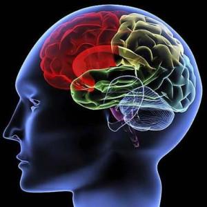 cervello-razionale