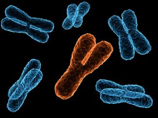 y_chromosome_1