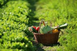 tornare agricoltura