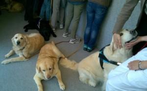 Pet therapy in rianimazione, cani in ospedale Careggi