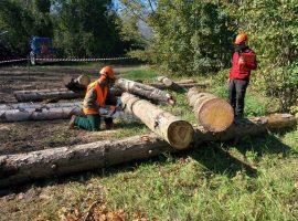 scuola forestale